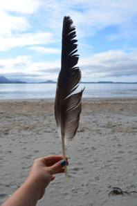 Amazing eagle feather I found at First Beach!