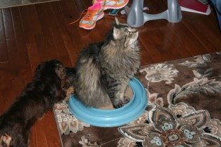 The Best 13 bucks spent on a cat toy EVER ...