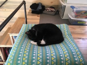 Tiny house cat on a pillow