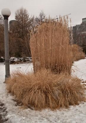 Dried grasses in Music Garden.