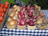 Onions and potatoes.