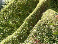 Three parallels in hedge