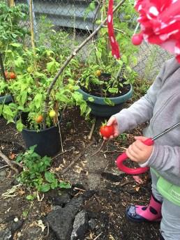 Child holding tomato.