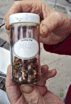 Jar of Rico's tomato seeds.