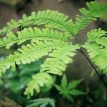 半日陰で育つ【草丈の低い】ガーデニング草花 12選