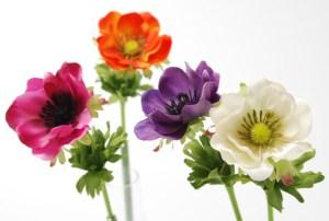 anemone-3