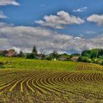 油粕の特徴と使い方【肥料の上手な施し方】