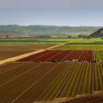 普通化成の特徴と使い方【肥料の上手な施し方】