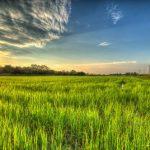 米ぬか 特徴と使い方【肥料の上手な施し方】