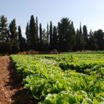 草木灰の特徴と使い方【肥料の上手な施し方】