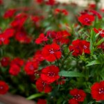 鉢花の置き場所は環境や季節に注意しよう!