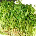 豆苗の栄養は免疫力アップの効果あり!【野菜の効能と食べ方】