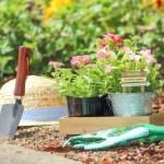 草丈の低いガーデニング草花30選【グランドカバーや花壇の縁取りにおすすめ!】