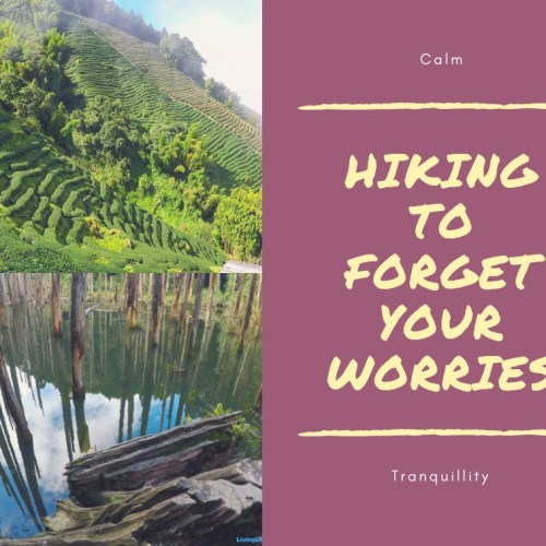 Hiking to Forget Your Worries 去台灣杉林森遠足