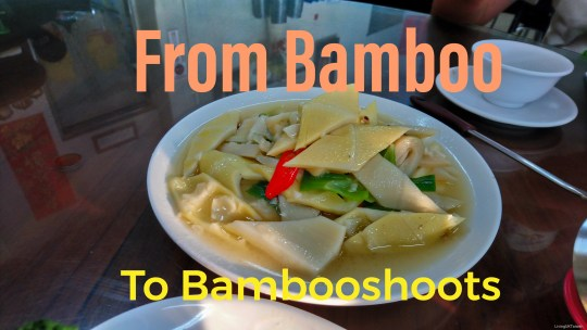 From Bamboo to Bambooshoots