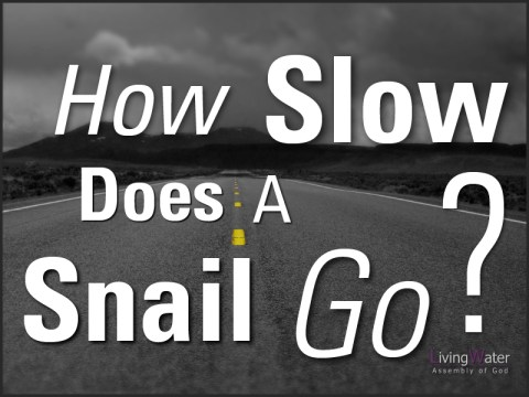 How Slow Does A Snail Go?