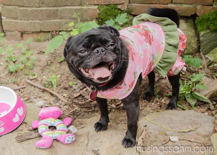 Abby Petsmart Dog