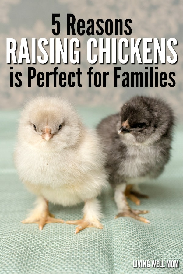 Thinking about getting chickens? There's more benefits than just fresh eggs! Here's 5 reasons why raising chickens is perfect for families!