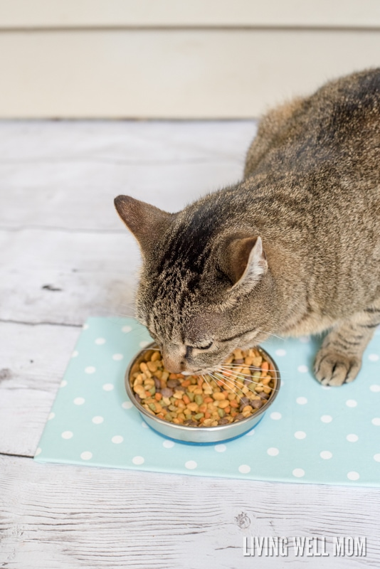 """Say good-bye to big ugly pet placemats and make your own with this very simple DIY Cat Food Placemat. It's so easy to make, no """"DIY talent"""" required, and you can customize the colors/design AND size to get the perfect placemat for your kitty!"""
