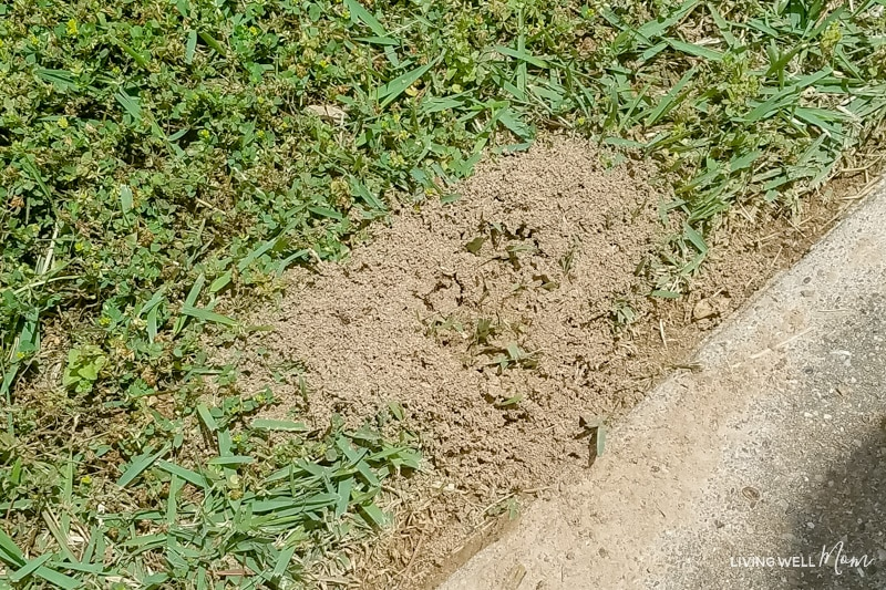 fire ant nest on side of road