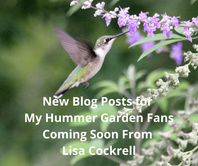 New Blog Posts for My Hummer Garden Fans Coming Soon From Lisa Cockrell