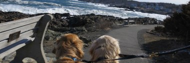 Scenic Dog Walks