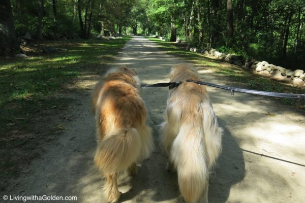Battle Road Trail – Concord, MA – Living with a Golden