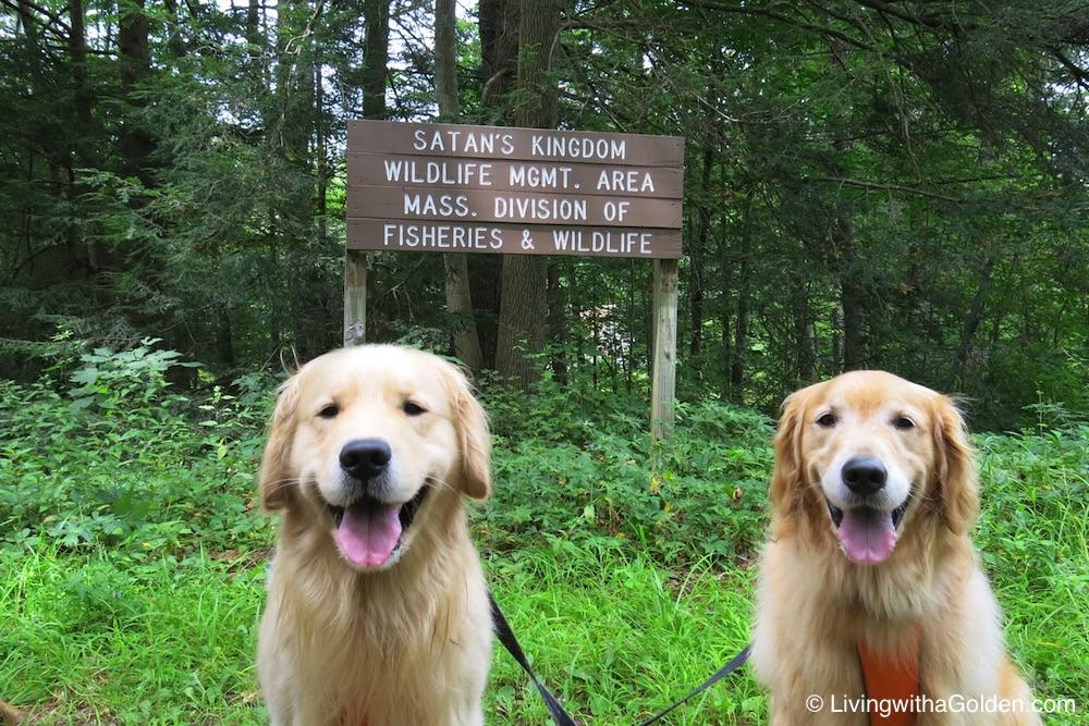 Dog Friendly Rye