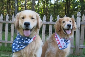 Helping Paws for Veterans
