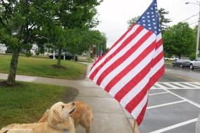 Thank You K9 Veterans