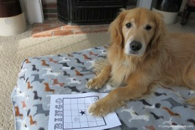 Bingo for Pets for Vets