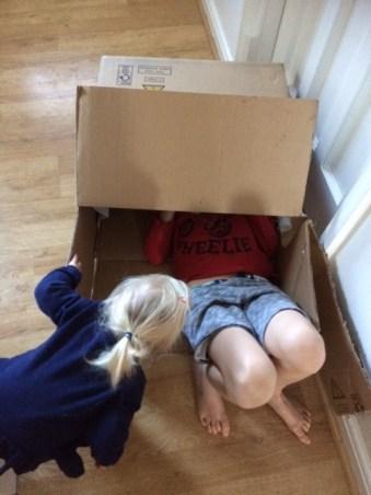 Jude in box