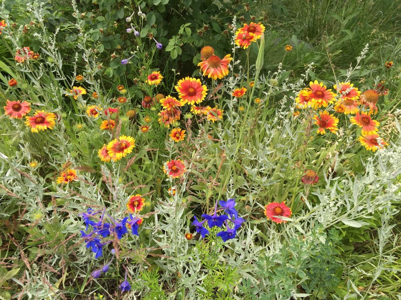 flowers-in-meadow