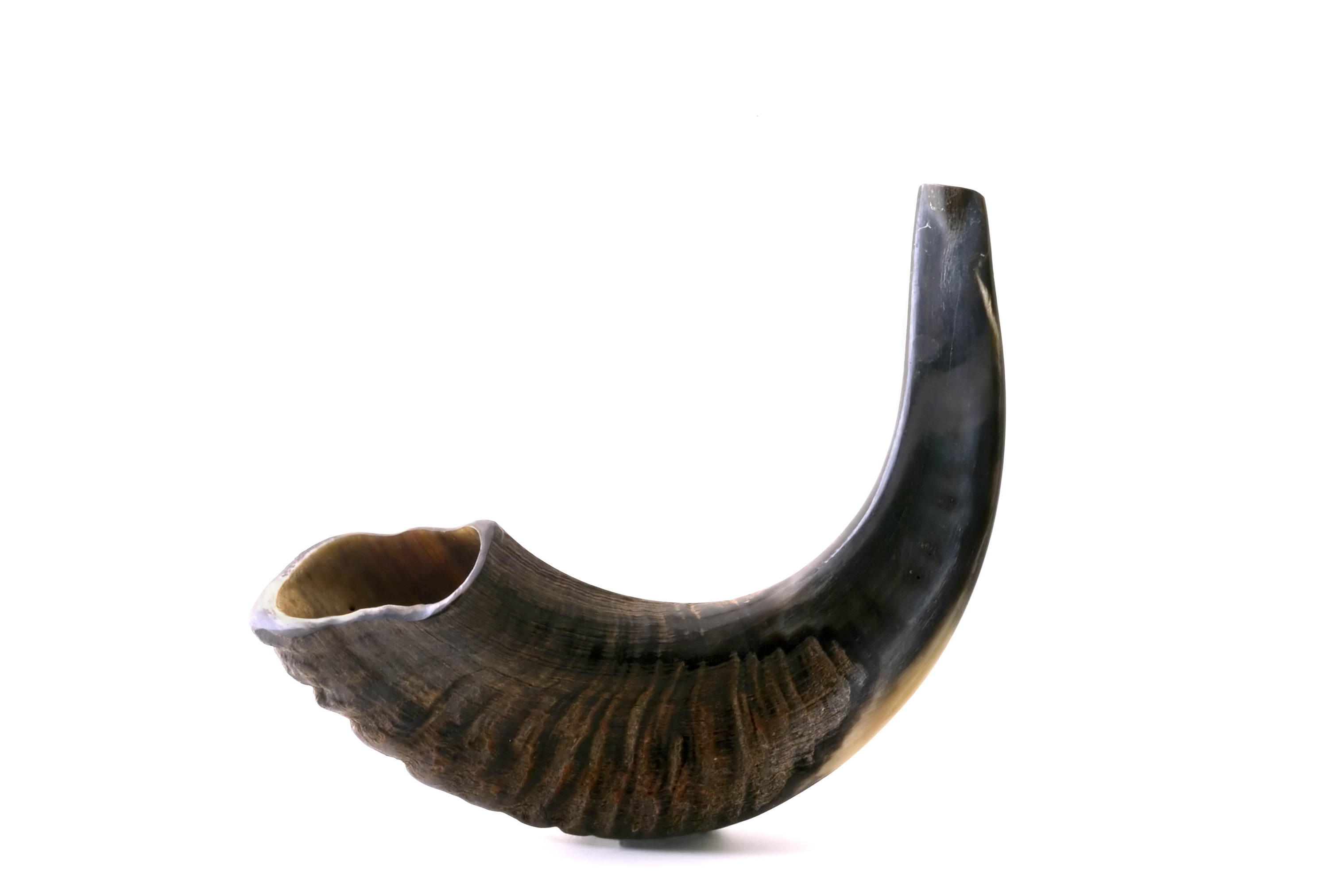 Image result for shofar images copyright free