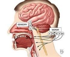 cranial nerves swallow