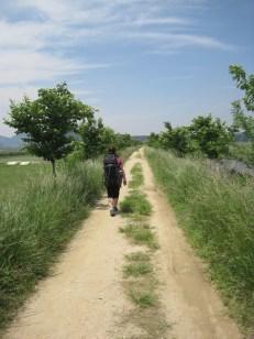 Unbong (운봉) –Inwol (인월) Trail