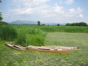 Upo Wetlands (10)