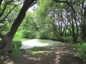 Upo Wetlands (4)