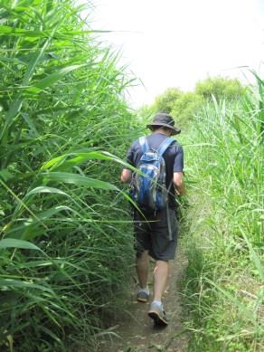 Upo Wetlands (5)