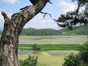 Upo Wetlands (8)