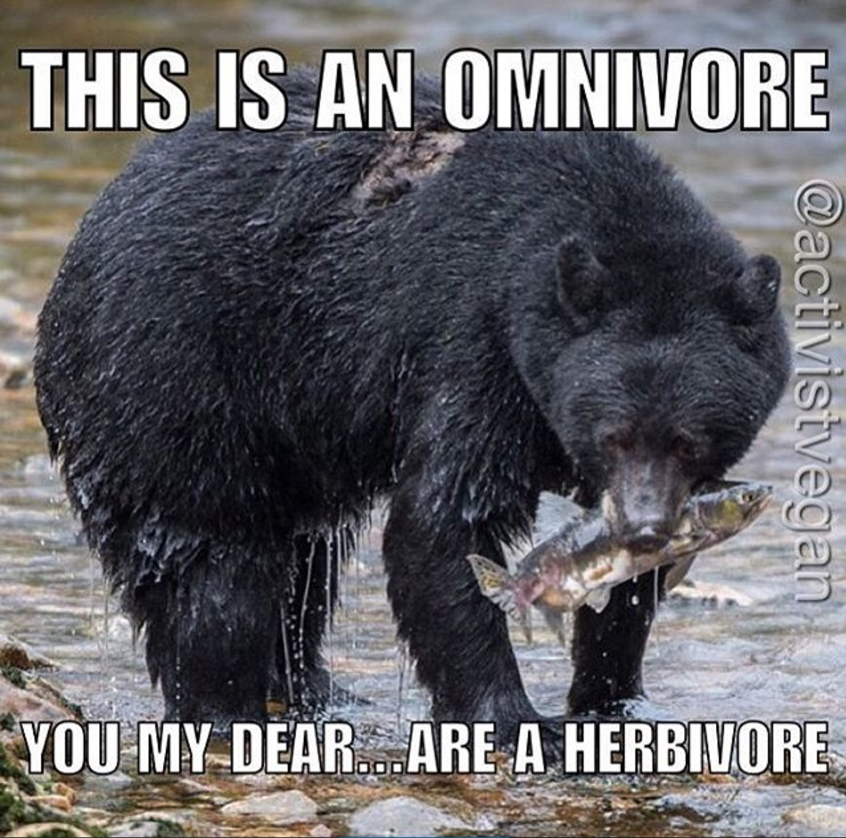 What Are Some Characteristics Of Herbivores