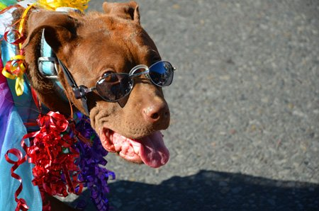the ultimate pet parade (yep, pets in costumes!). guaranteed smiles ahead!
