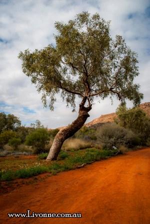 desert park alice springs (109)-2