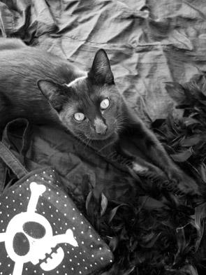 Constantine le chat et Halloween