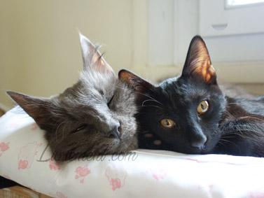 Moriarty et Constantine les chats