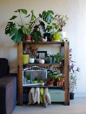 Etagère de plantes