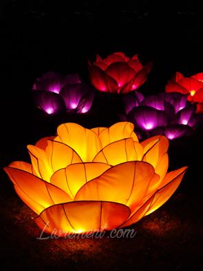 Lotus du festival des lanternes à Gaillac
