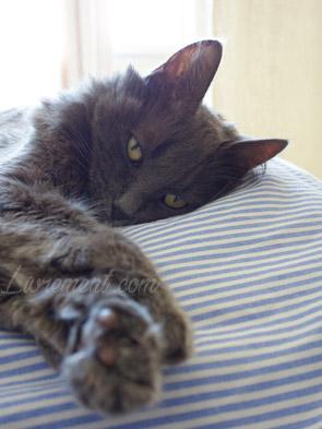 Chat à la sieste