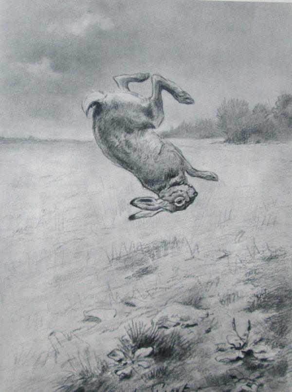 Au pays du chamois