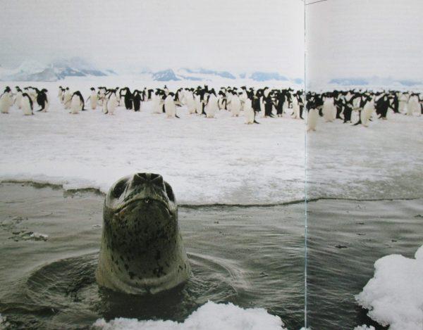Livre Antarctique